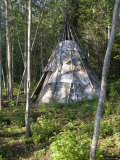 Birch Bark Teepee in the Woods