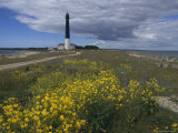 Estonia, Saaremaa: Landscape of Lighthouse