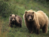 Grizzly Sow and Cub, Alaska