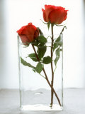 Two Red Roses in a Glass Vase