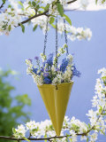 Spring Flowers in Hanging Vase on Flowering Cherry Tree