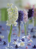 Hyacinths in Glasses as Table Decoration