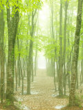 Buy Beech Forest at AllPosters.com