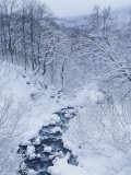Mountain Stream in Snow
