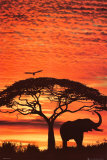 Buy African Sunset at AllPosters.com