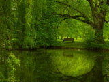 Green World Fotografie-Druck