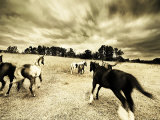Horses Running and Playing in Barren Field