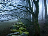 Buy Moss Covered Stone Wall and Trees in Dense Fog at AllPosters.com