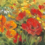Oriental Poppy Field I