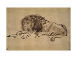 Buy Lion Resting, Turned to the Left at AllPosters.com
