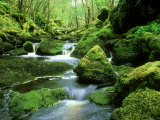 Stream and Mossy Boulders, Scotland