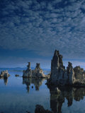 Tofas at Mono Lake, California