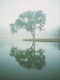 Louisiana, Oak Tree with Reflection