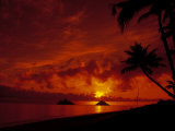 Buy Silhouette of Palm Trees at Sunset, Oahu, HI at AllPosters.com