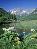 Wildflowers, Maroon Bells, CO