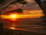 Buy Sunset on the Ocean with Palm Trees, Oahu, HI at AllPosters.com
