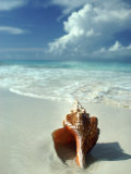 Seashell on Beach