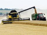 Yellow New Holland Combine Harvester Unloading Grain into Trailer, UK