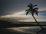Buy A Silhouetted Palm Tree on a Twilit Beach at AllPosters.com