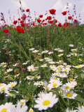 Wildflower Farming on a Kibbutz in Springtime
