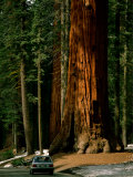 Buy A Car Drives in Front of a Giant Sequoia Tree at AllPosters.com