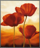 Poppies in Sunlight I