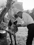Jewish Israeli Father and Son Butcher a Goat For Food