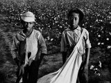 African American Children - Are Cotton Pickers Pulling Sacks Along Behind Them as They Pick Cotton