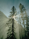 Buy Rays of Sunlight Beam Through the Mist and Boughs of Towering Evergreen Trees at AllPosters.com
