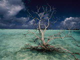 A Tree Floats in the Crystal-Clear Waters of Palmyra Atoll