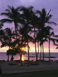 Buy Coconut Trees Silhouetted on Mauna Lani Bay Hotels Beach at Sunset at AllPosters.com