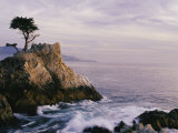 Lone Cypress Tree on a Rocky Point Near Pebble Beach