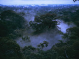 Buy Aerial of Gunung Palung National Park, Borneo, Indonesia at AllPosters.com