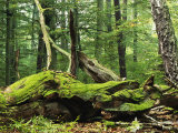 Mosses Growing on Dead Tree, Muritz National Park, Germany