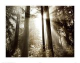 Buy Morning Light at AllPosters.com