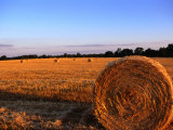 Rolls of Straw in Fields along Highway 26, Georgia, USA