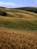 Rolling Hills of Tuscan Countryside, Italy