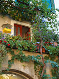 Buy Grape Arbor and Flowers, Lake Garda, Malcesine, Italy at AllPosters.com