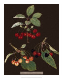 Brookshaw Cherries