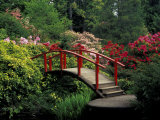 Red Bridge in Springtime, Koybota Gardens, Seattle, Washington, USA
