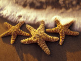 Buy Sunset and Starfish on Surf Line, Maui, Hawaii, USA at AllPosters.com