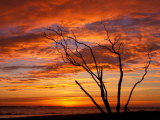 Dead Tree on Lighthouse Beach at Sunrise, Sanibel Island, Florida, USA