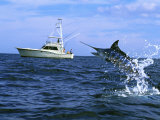 Buy Marlin with Fishing Boat in Background at AllPosters.com
