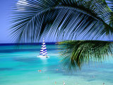 Buy Palm Tree, Swimmers and a Boat at the Beach, Waikiki, U.S.A. at AllPosters.com