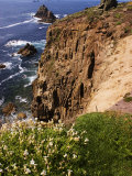 Wildflowers on the Rugged Coastline at Lands End, Land's End, United Kingdom