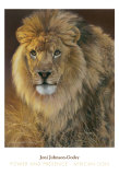 Power and Presence: African Lion