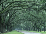 Historic Wormsloe Plantation, Savannah, Georgia, USA