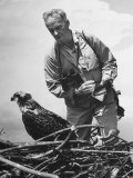 Great Naturalist/Ornithologist Roger Tory Peterson Taking Notes as He Inspects a young osprey