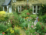 Cottage Garden With, Colourful Flower Beds Direlton, Scotland, UK