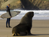 Surfer Standing Near Sea Lion on Beach, the Catlins, Porpoise Bay, New Zealand